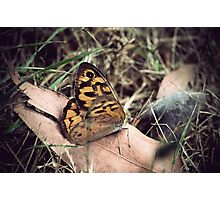 Butterfly #3 Photographic Print