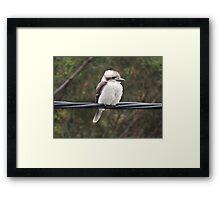 Kookaburra on the Wire Framed Print