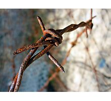 Barbed Wire Flower... Photographic Print