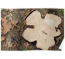 Top view of a big cut tree Poster