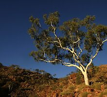 Images of Australia - Ghost gum by Gerry Pearce