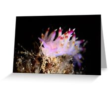 Flabellina sp Greeting Card