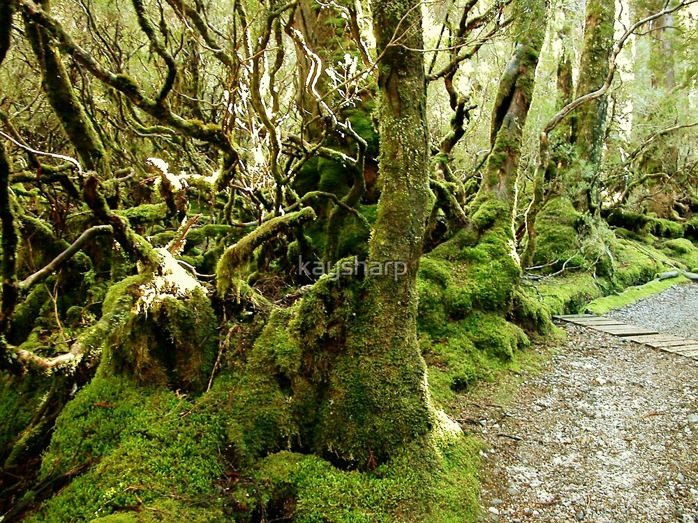 Weindorfer's Forest Walk, Cradle Mountain, Tasmania, Australia. by kaysharp