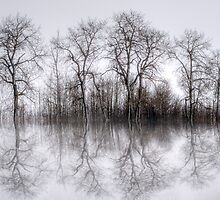 Winter Trees by Keri Harrish