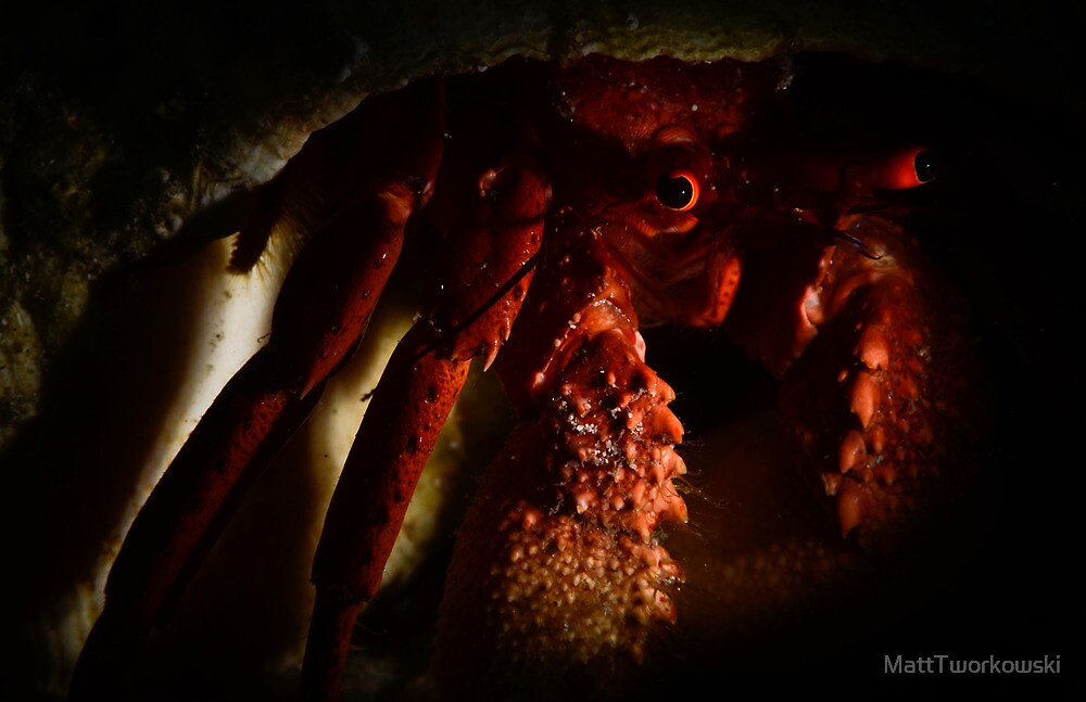 Hermit Crab by MattTworkowski
