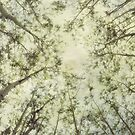 Late Summer Tree Tops by Priska Wettstein