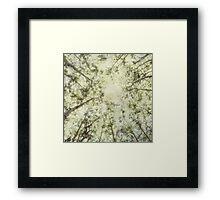 Late Summer Tree Tops Framed Print
