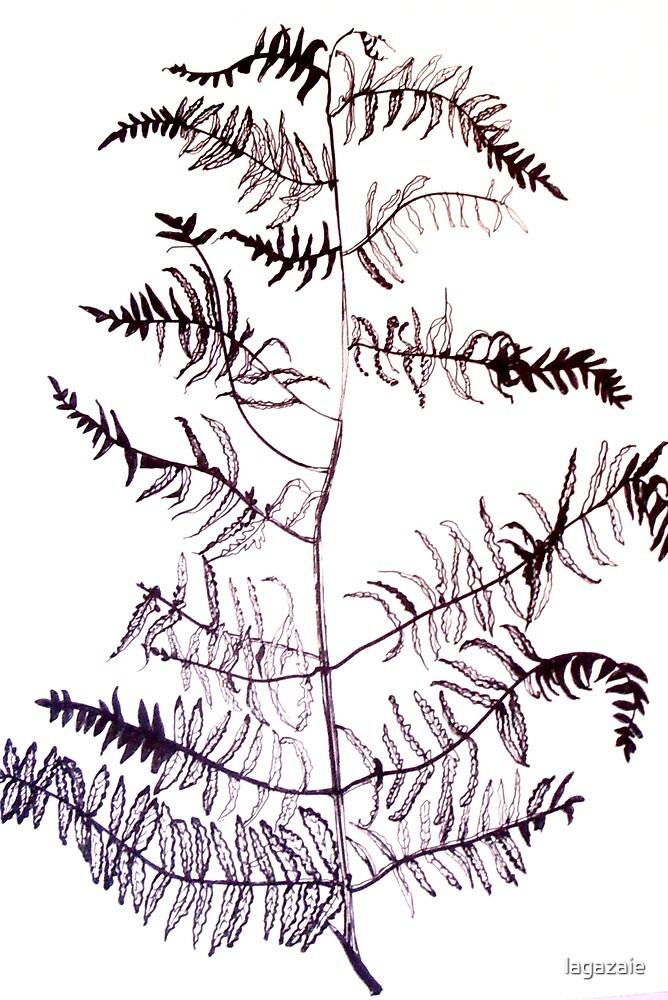 Bracken drawing by Jacqueline Eirian McKay