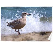 Seagull in Front of Crashing Wave Poster