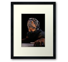Regal and Proud Male Rottweiler Portrait Isolated Framed Print
