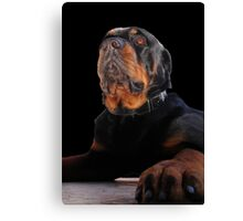 Regal and Proud Male Rottweiler Portrait Isolated Canvas Print