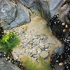 Rock pools! by amylauroo