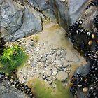 Rock pools! by amylauroo