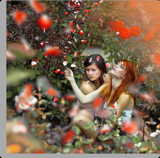 Red Roses by Marcin ?askarzewski