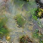 Rock pools #2 by amylauroo