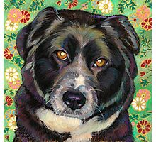 Zoe, a sweet Rescue Dog  Photographic Print