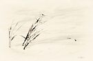 Windswept by KBritt