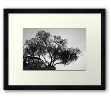 Tree in black and white  Framed Print