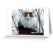 Fluffy on the Fence Greeting Card