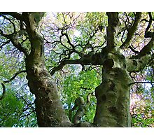 Forked Branches Photographic Print