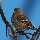 Winter Bird 3 by Jeff Ashworth & Pat DeLeenheer