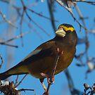 Winter Bird 4 by Jeff Ashworth & Pat DeLeenheer