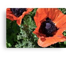 Utah Flowers Canvas Print