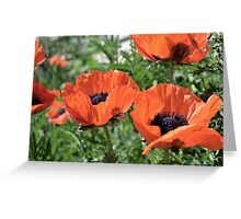 Orange Flowers Greeting Card