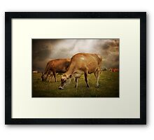 Cornish Cows Framed Print