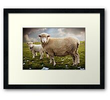 Snowy Sheep Framed Print