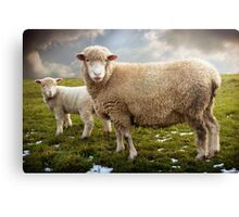 Snowy Sheep Canvas Print