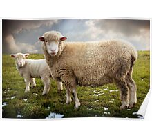 Snowy Sheep Poster