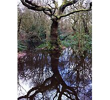 Reflections In The Forest Photographic Print