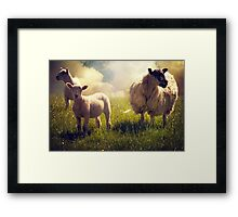 3 Sheep Framed Print