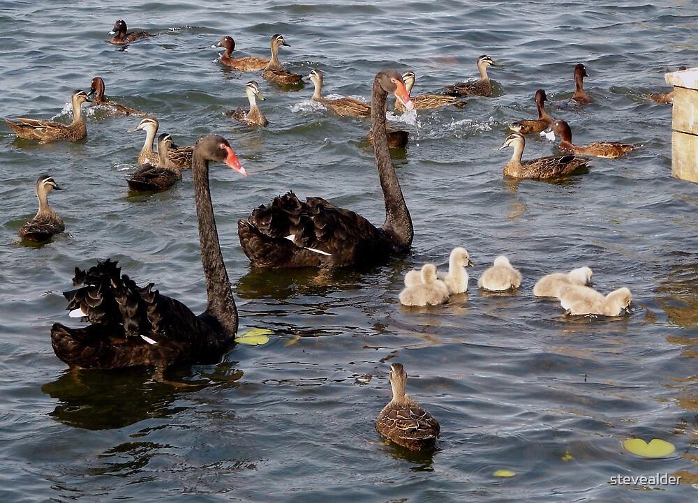 Quite A Gathering by stevealder