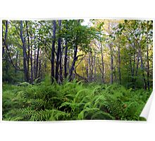 Ricketts Glen Ferns & Forest Poster