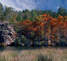Riverbank Cypress by Carolyn  Fletcher