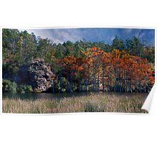 Riverbank Cypress Poster