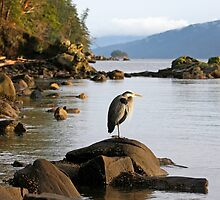 Blue Heron in winter afternoon west coast landscape by TerrillWelch