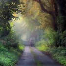 Once upon a country lane by Cat Perkinton