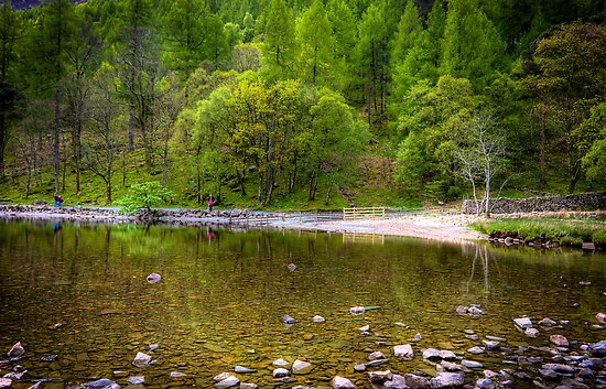 Tree reflections in the water at Lake Buttermere by Elana Bailey