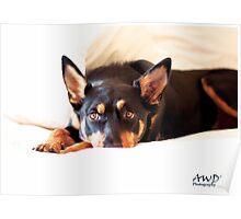 AWDRI Calendar 2013 - February Poster