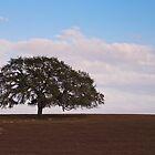 Florida Pasture Land by ejlinkphoto