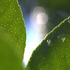 Lemon leaves by Morag Anderson