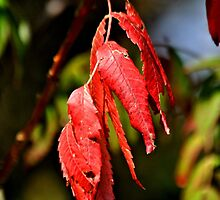 Red Leaves by Kristen O'Brian