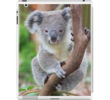 The koala - Australia's cutest iPad Case/Skin