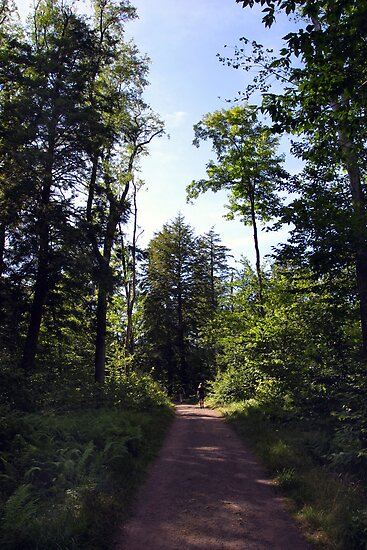 Road to the Hiking Trails at Ricketts Glen by Gene Walls