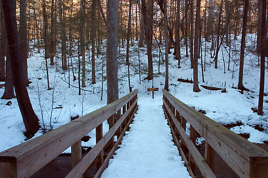 Snowy Footbridge On Evergreen Trail by Gene Walls