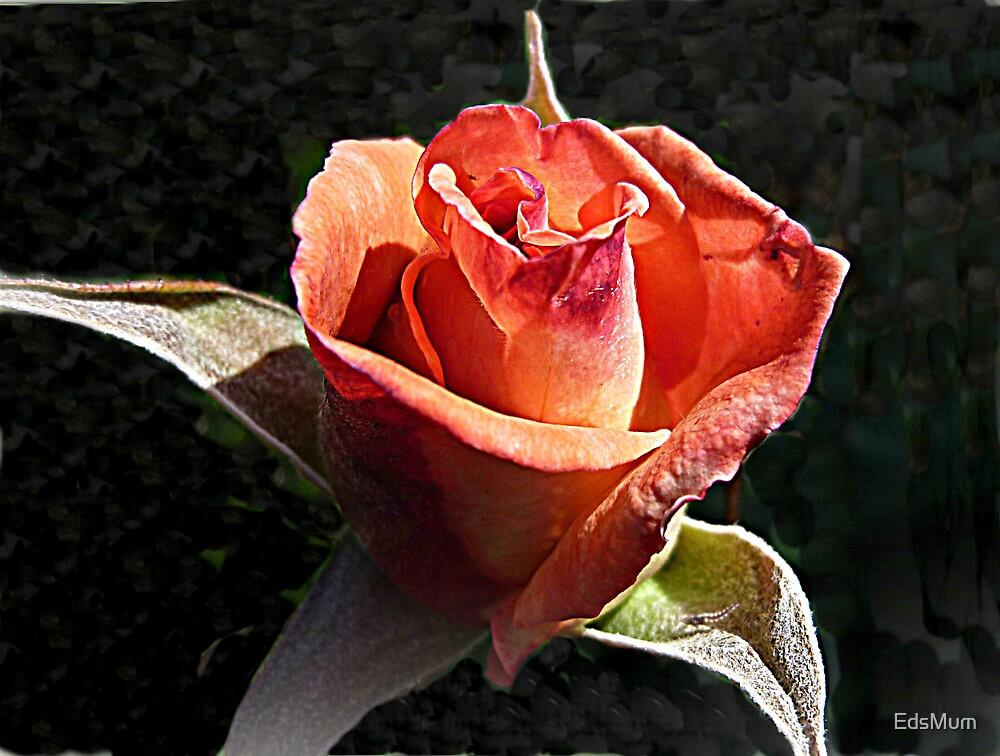 Small Rose -  Bold & Beautiful by EdsMum