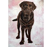 Chocolate Lab Painting Photographic Print